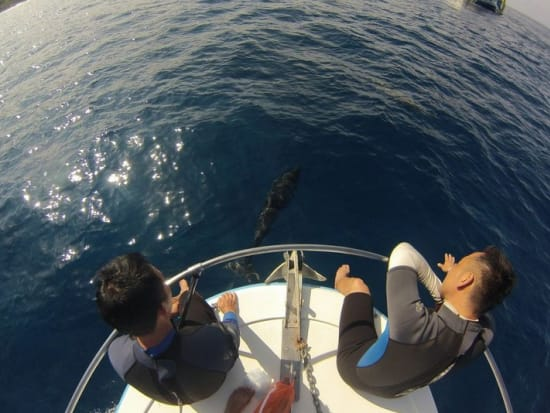イルカ14(船の上から眺める人)