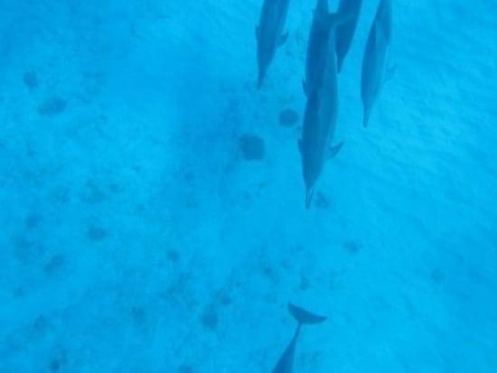 イルカ16(海底、写真縦長)