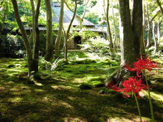 京都 祇王寺