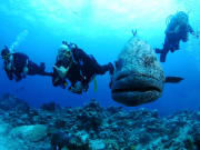 Great Barrier Reef diving experience