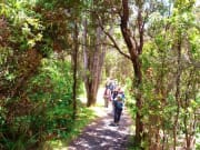 7.サーストン・ラバ・チューブ/熱帯雨林