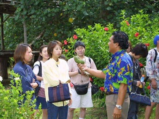 Adventure River Cruise - Turtle Tours Guam (13)