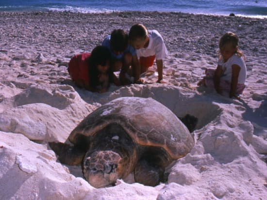 turtle-laying-eggs
