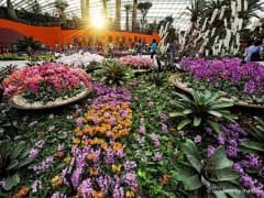 Flower Dome - Changing Floral Display