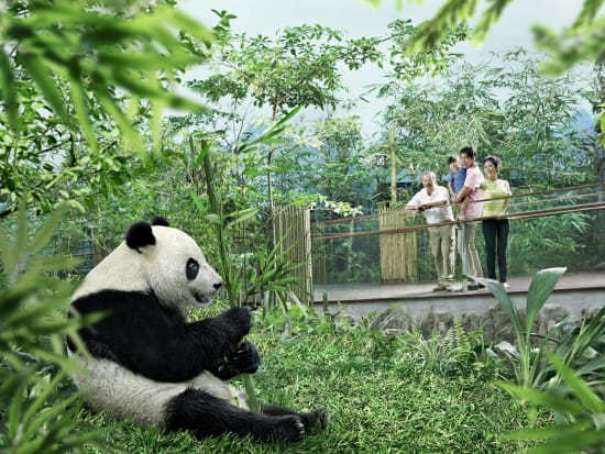River Safari Giant Panda Forest