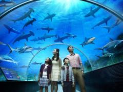 Sentosa S.E.A Aquarium