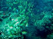 Coral_Fish3