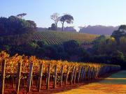 Cape-Lodge_Margaret-River_Vineyards-573