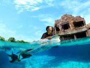 Dolphin Adventure_LR