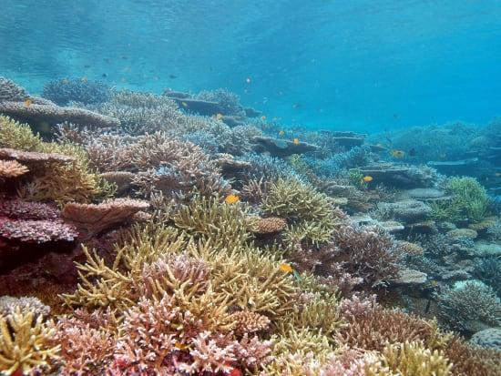 米原珊瑚4
