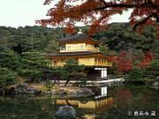 Golden Kinkakuji Temple in Autumn