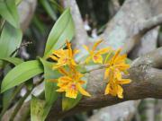 world_botanical02
