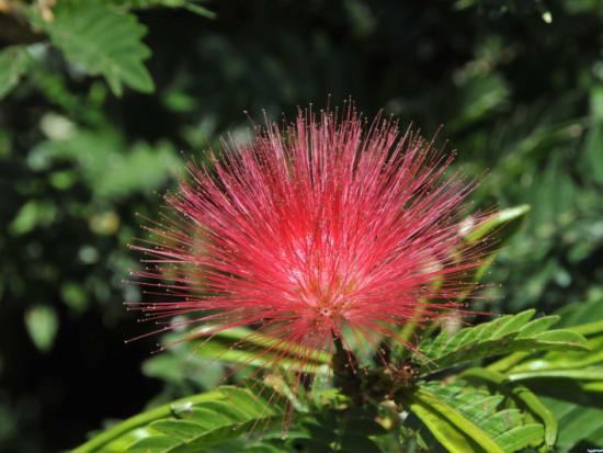 world_botanical01