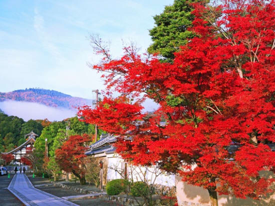 京の紅葉_嵐山_嵯峨野