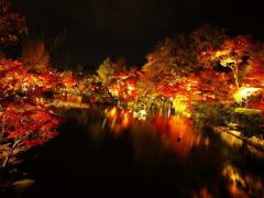 永観堂 ライトアップ (2)