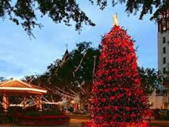 The Christmas Trees are lovely