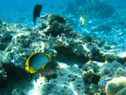 Hawaii_Kona_Kailua Glass Bottom Boat_reef_fish