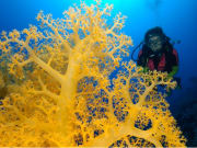 Dive into the waters of Ribbon Reefs and Cod Hole