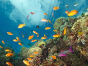 Coral reefs teeming with bright-colored fish