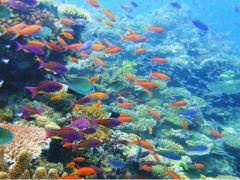 Rich colors of marine life at Great Barrier Reef
