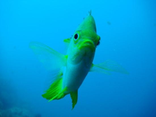 cebu mactan nalusuan snorkeling blue green fish