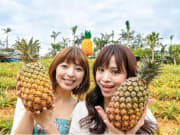 The pineapple field at Nago Pineapple Park