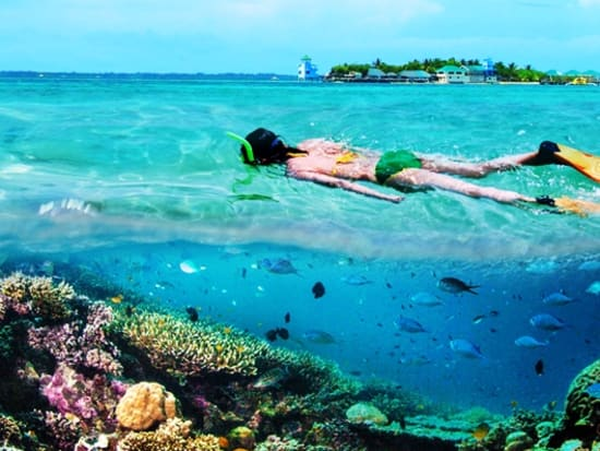 Nalusuan Snorkeling colorful coral reef