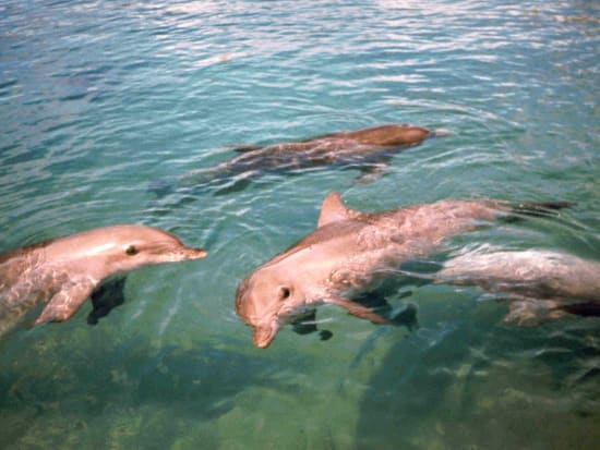 Three Dolphins High Res-X3