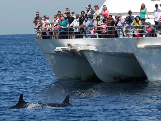 Dolphin Watching 2-X2