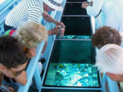 guided-tour-in-glass-boat-bottom-in-bora-bora