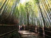 Bamboo grove Arashiyama Sagano