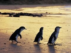 Penguin 9