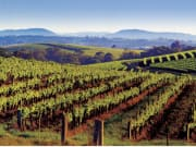 14_Hunter Valley Vineyards