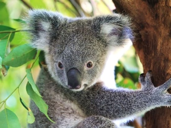 Cairns Tropical Zoo 354_R