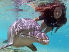 USA_Hawaii_Dolphin-Swim