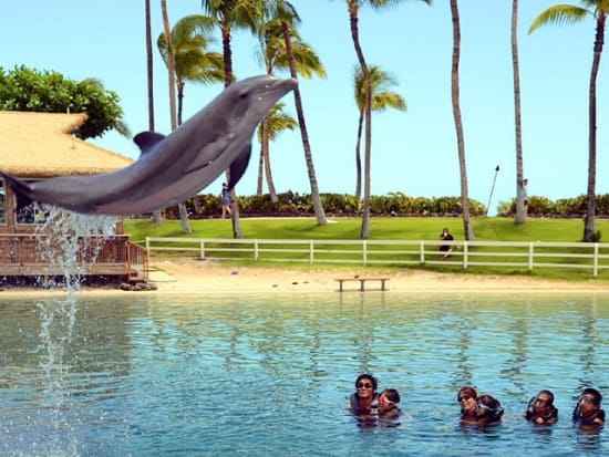 USA_Hawaii_Dolphin-Tricks