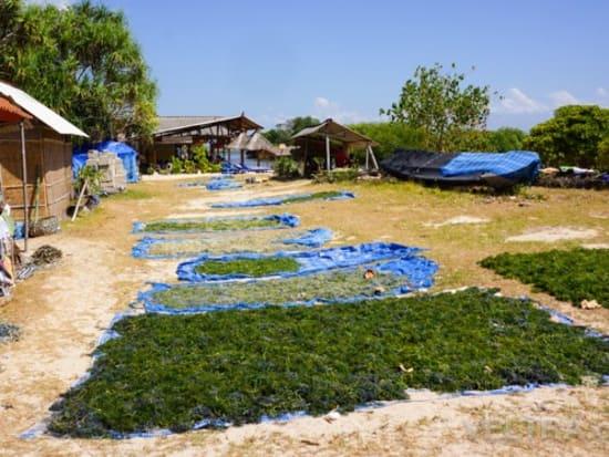 lembongan_mangrove-44
