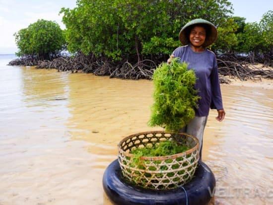 lembongan_mangrove-41