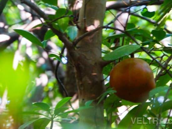 lembongan_mangrove-18