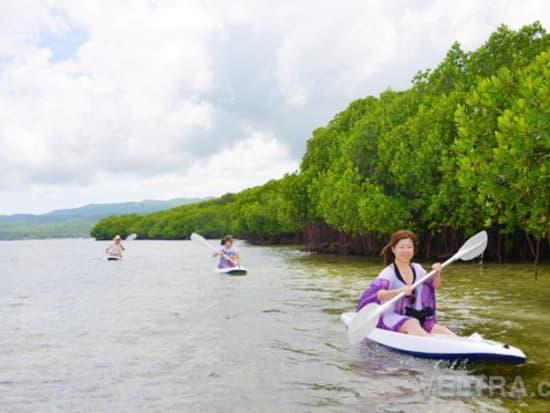 lembongan_mangrove-39