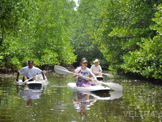 lembongan_mangrove-37