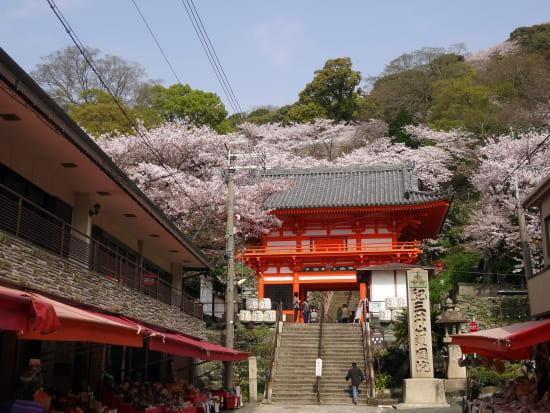 紀三井寺 山門の桜2