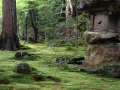 One of the mossy gardens of Jikkoin Temple.