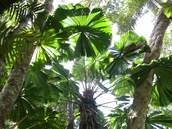Rainforest Tour 6
