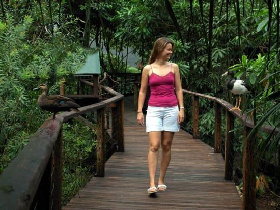 Rainforest Tour 10
