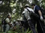 一日コース:原生林ガイドの様子