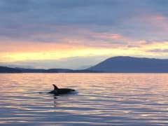 FEATURE-Orca-at-sunset-photo-Valerie-Shore-900x500