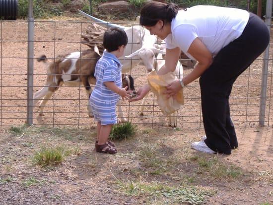 20150323044558_346128_Boy_Feeding_Goat