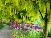 VanDusen Botanical Garden-28