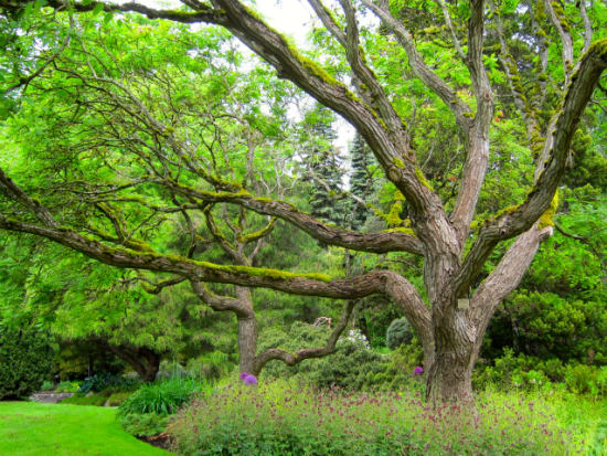 VanDusen Botanical Garden-49